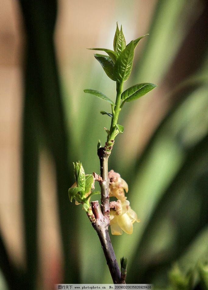 新芽 嫩芽 春天 出芽 叶芽 嫩叶 发芽 绿芽 绿叶 树叶 生物世界 树木