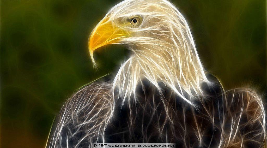 炫彩动物图片 动物 光线 线条 老鹰 野生动物 炫彩 生物世界 其他