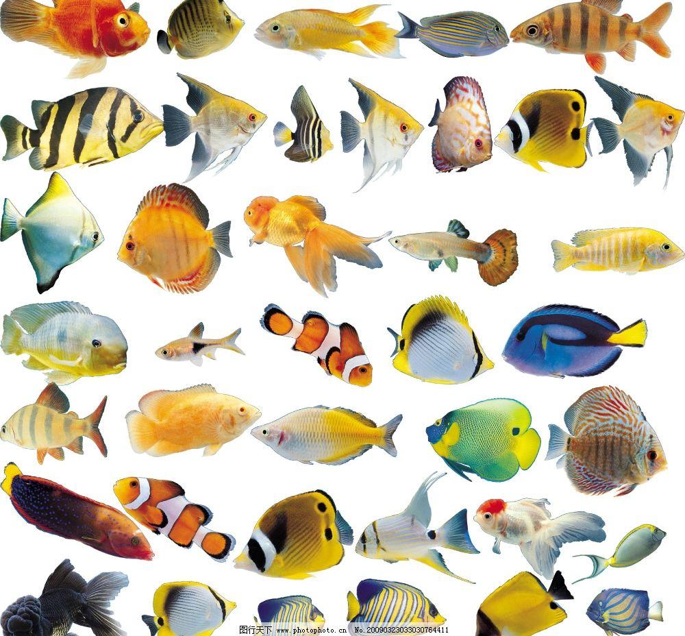 各种鱼类 海洋鱼类 观赏鱼 养鱼 金鱼 水族 精美鱼图片 高清鱼图片