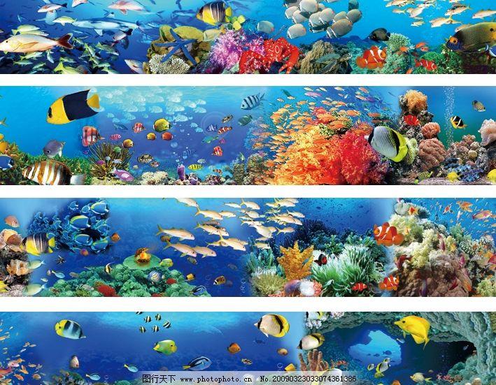 海底世界 海洋生物 鱼群 小鱼 珊瑚 贝壳 海星 鲨鱼 龙虾 psd分层素材
