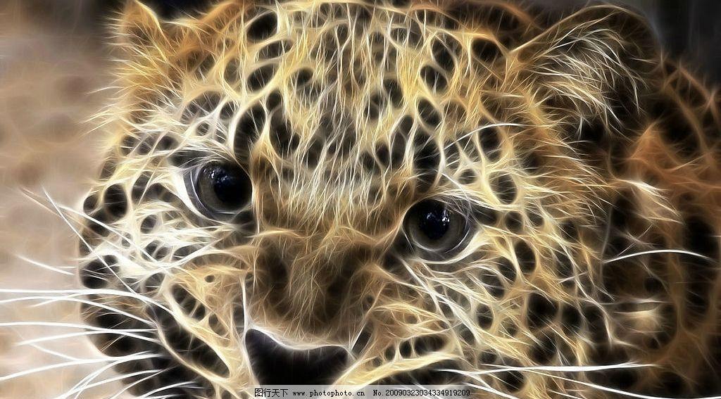 动物 光线 线条 豹子 花豹
