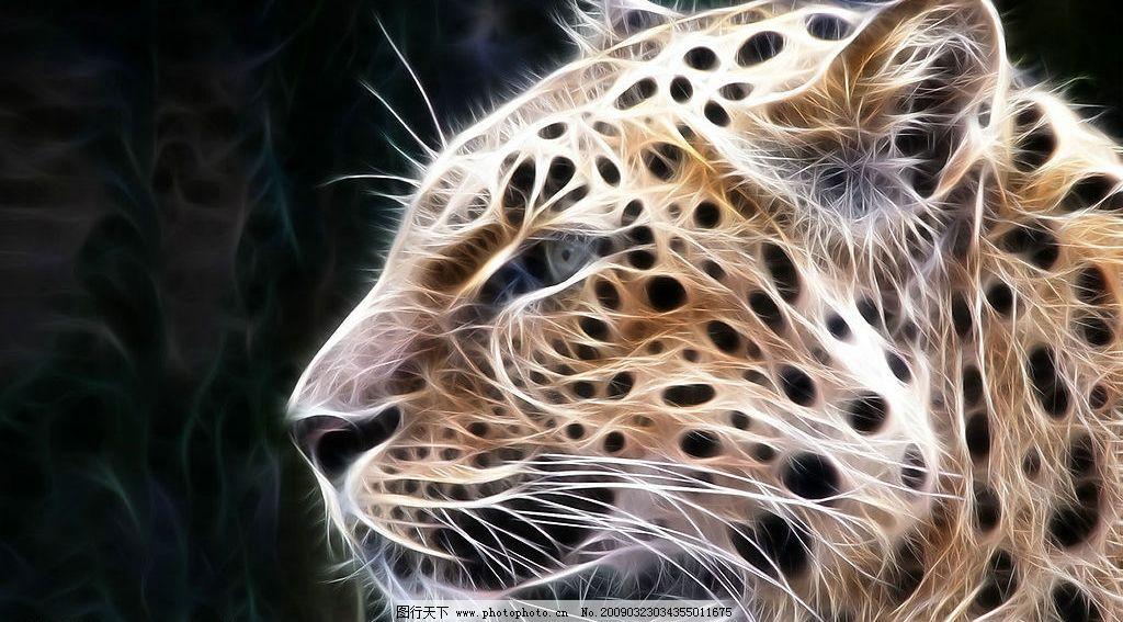 炫彩动物图片 动物 光线 线条 豹子 野生动物 炫彩 生物世界 其他