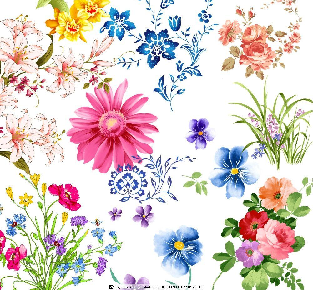 花纹集 韩国花纹 菊花 兰花 野花 背底花纹 礼子用花 鲜花 psd分层
