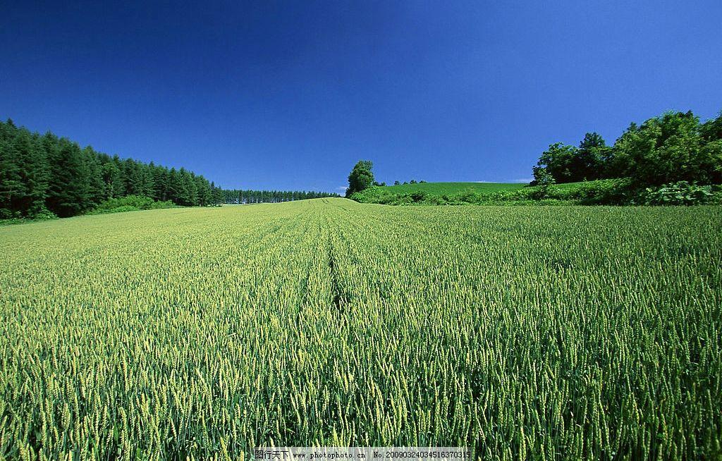 壁纸 草原 成片种植 风景 植物 种植基地 桌面 1024_654