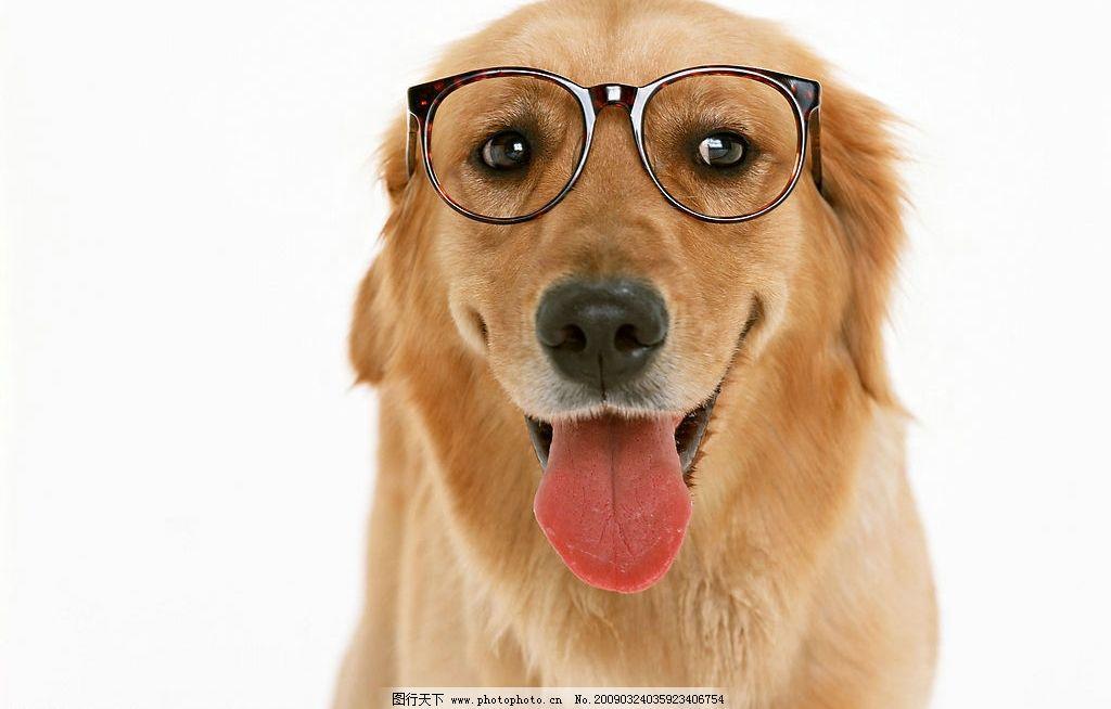 犬眼球结构
