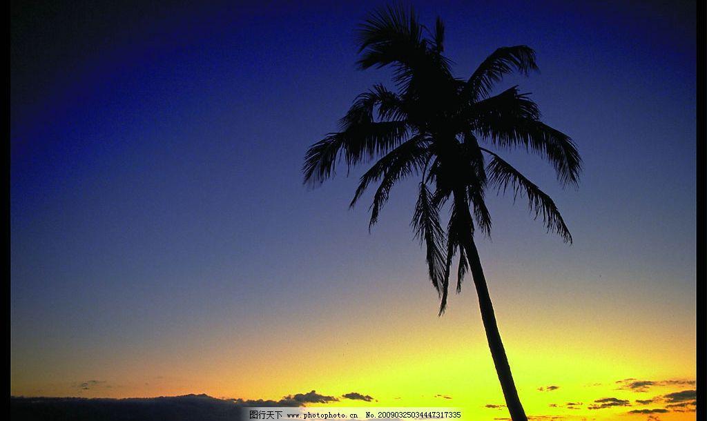 夕阳——椰子树图片