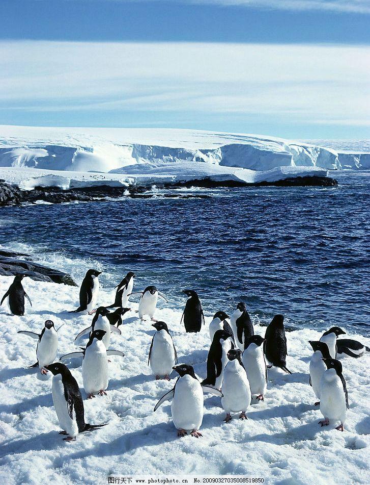 企鹅 南极 底图 冰山 天空 海水 广告设计 生物世界 野生动物