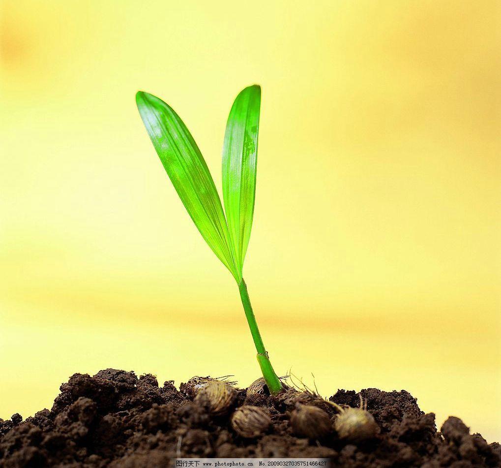 泥土中生长出来的叶子图片