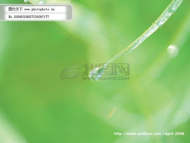 绿色桌面背景图片 浅绿色背景图片