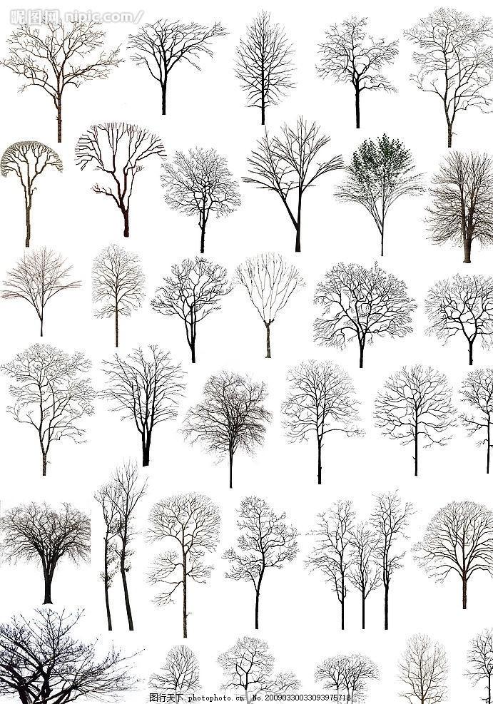 枯树简笔画大全大图