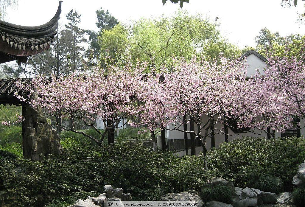 桃花林 桃花 灌木 碎石 亭子 雪松 柳树 假山 自然景观 自然风景 摄影