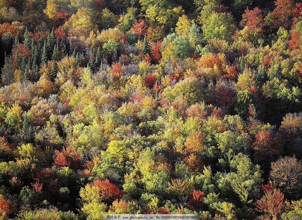 风景 树林 叶子 红色的树 黄色的树 摄影图库