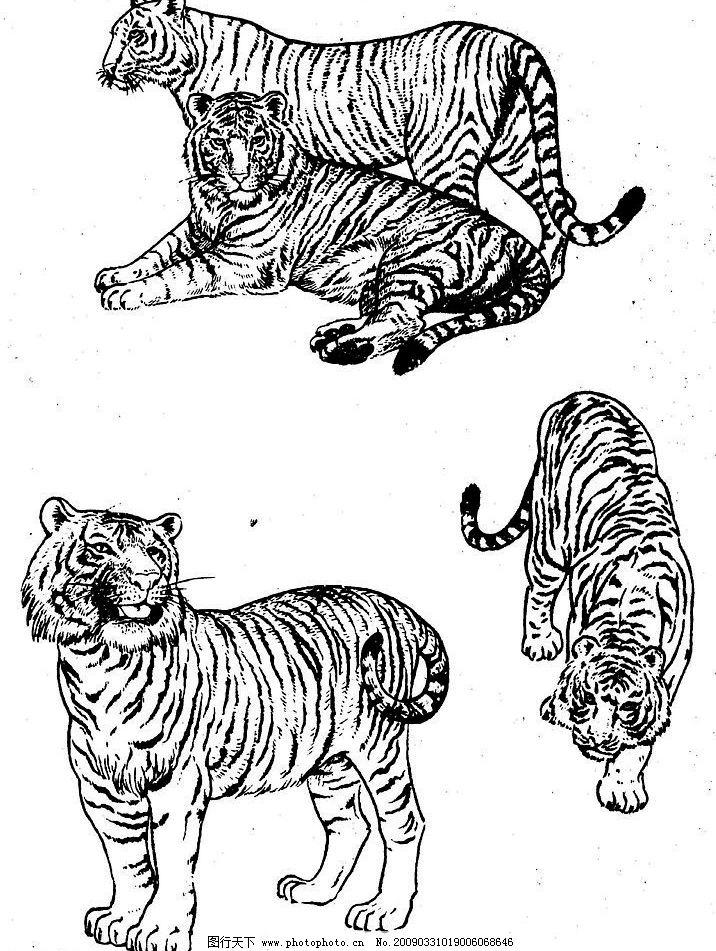 百虎谱06 百虎图 绘画 黑白稿 线描 白描 工笔 国画 写意