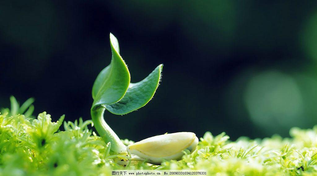 绿芽 绿叶 生命 萌芽 旅游摄影 自然风景 摄影图库