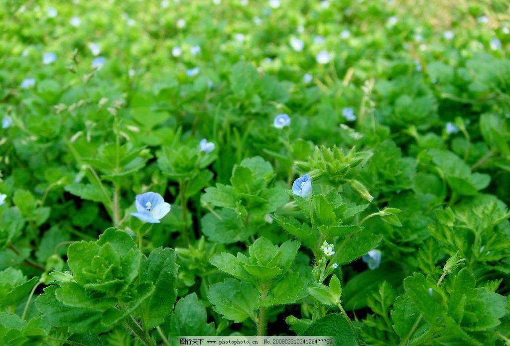 春天的野花 绿叶 小花 旅游摄影 自然风景 摄影图库