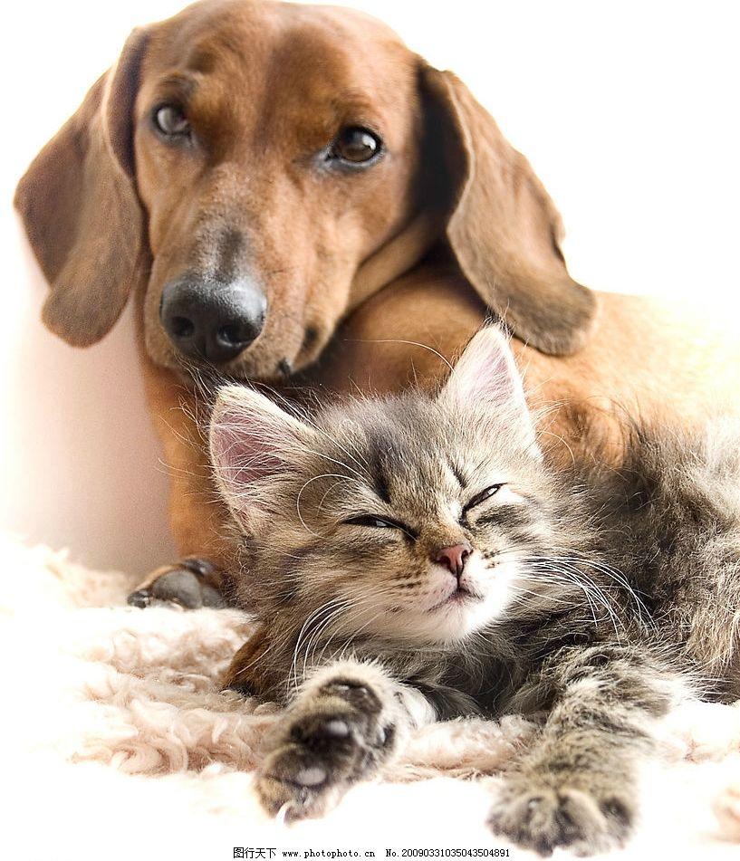 动物世界 狗与猫 狗 猫 可爱 睡觉 生物世界 野生动物 摄影图库 300dp