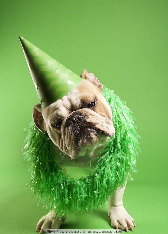 动物世界 沙皮狗 小丑 花环 卡通 狗 绿色背景 生物世界 野生动物