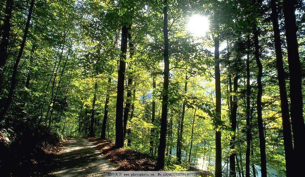 森林 树木 林业 木材 资源图片